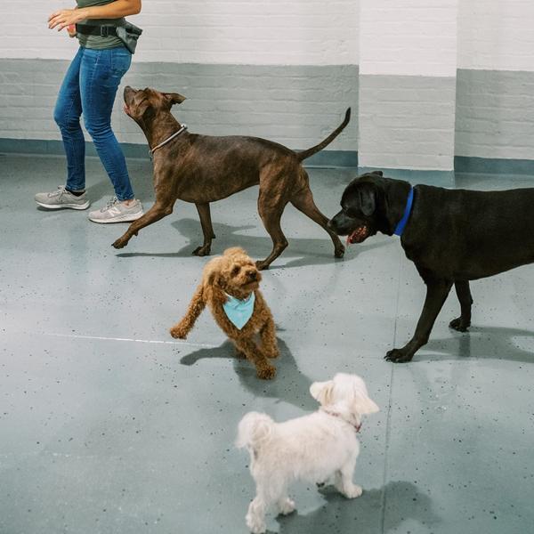 dogdaycarerunning.png